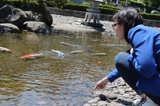 ジェヨンと鯉